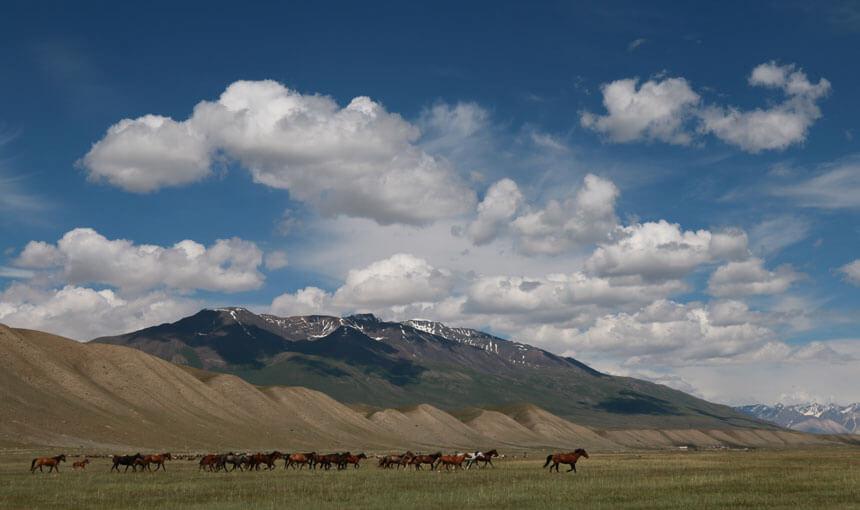 Chevaux montagnes Kirghizistan